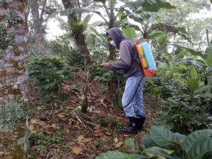 control quimico de la broca, insecticidas broca del cafe