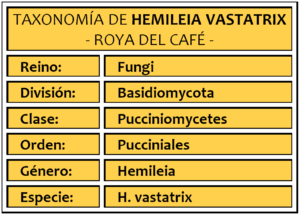 taxonomia hemileia vastatrix roya